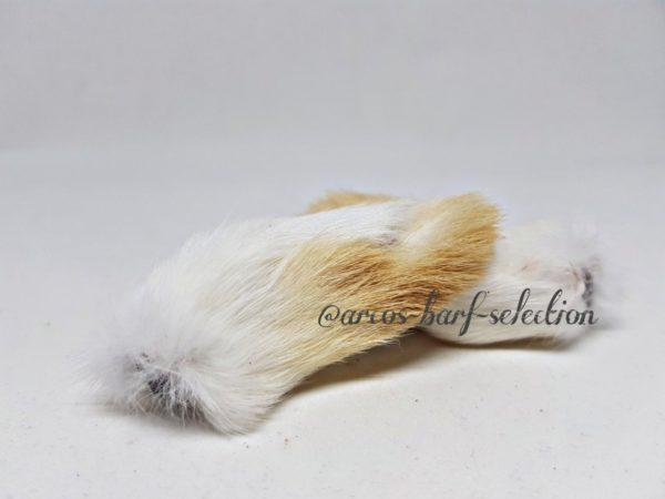 Kaninchen-Vorderläufe mit Fell